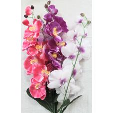 Орхидея натуральная