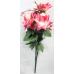 Розы остроугольные